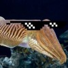 Go to the profile of Crypto Cuttlefish