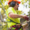 Go to the profile of Tree Removal Services