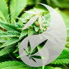 Go to the profile of Tao Of Cannabis