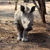 Go to the profile of Australian Rhino Project