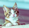 Go to the profile of Feliway