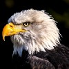 Go to the profile of The Eagle