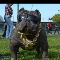 Go to the profile of BigBoyDogg-BBD Community.