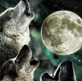 Go to the profile of Wolf Moon
