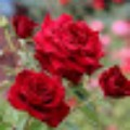Go to the profile of Rose Marry