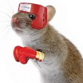 Go to the profile of 3 Blind Mice Boxing