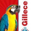 Go to the profile of Gillece Plumbing