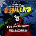 Go to the profile of Gorilla Seed Bank