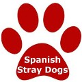 Go to the profile of Spanish Stray Dogs