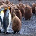 Go to the profile of linuxusergroup
