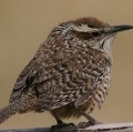 Go to the profile of spottedwren