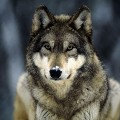 Go to the profile of Ulf Wolf