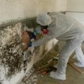 Go to the profile of Mold remediation NJ