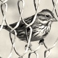 Go to the profile of The Sparrow Project