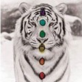 Go to the profile of Tiger Saw