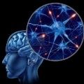 Go to the profile of Healing My Brain