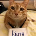 Go to the profile of Keith Ng