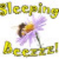 Go to the profile of Sleeping Beezzz
