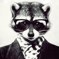 Go to the profile of Mr.Raccoon