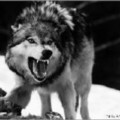 Go to the profile of Den Wolf