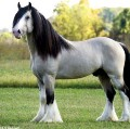 Go to the profile of Ghost Pony