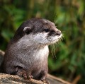 Go to the profile of Anonymous Otter