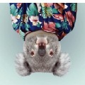 Go to the profile of Not koalafied