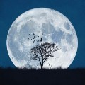 Go to the profile of Moondrop