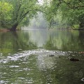 Go to the profile of Cedar River Watershed District