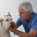 Go to the profile of Dr Dogs 247