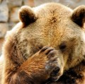 Go to the profile of Eponymous Bear