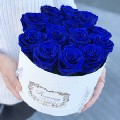Go to the profile of Blue Rose