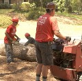 Go to the profile of Todd's Tree Services