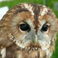 Go to the profile of The Owl's Conundrum