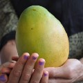Go to the profile of Markets and Mangoes