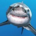 Go to the profile of Angry Shark