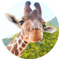 Go to the profile of Giraff.io