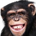 Go to the profile of Antidotes for Chimps