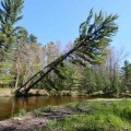 Go to the profile of Tree Falling in a Forest