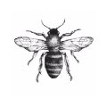 Go to the profile of honeycrypto