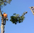 Thomas R. Smith Tree Surgeons - @trsmithtree1 - Medium