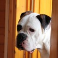 Go to the profile of Dog Door Sliding
