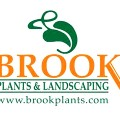 Go to the profile of Brook Plants