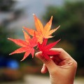 Go to the profile of autumnleaf