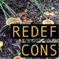 Go to the profile of Redefine Conservation