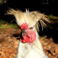 Go to the profile of Funky Chick