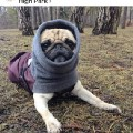 Go to the profile of Pugs