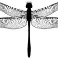 Go to the profile of E-Dragonfly