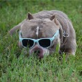 Go to the profile of Texas Size Bullies