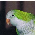 Go to the profile of The Snarky Parrot